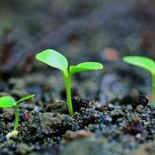 農作物復合肥