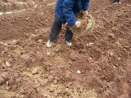 東莞有機肥廠家